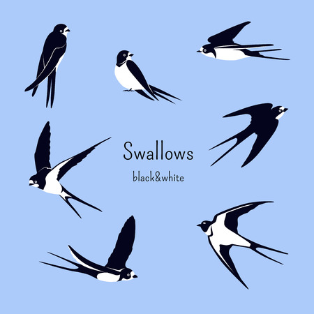 Simple Swallows on a light blue background. Five flying and two sitting swallows in cartoon style. Flying birds in different views. Black and white birds. Design elements. Stock Illustratie