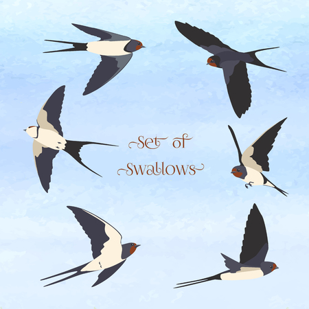 Simple Swallows on a light blue background. Five flying and two sitting swallows in cartoon style. Flying birds in different views. Illustration