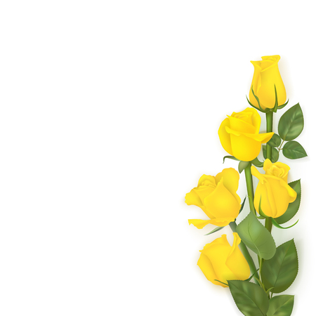 Delicate  yellow roses Vector illustration on white background.