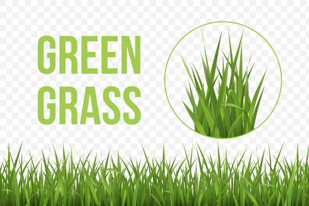 Seamless horizontal green grass border and fragment of grass patch. Spring or summer plant lawn. Photo realistic grass on a transparent background. Stock Illustratie
