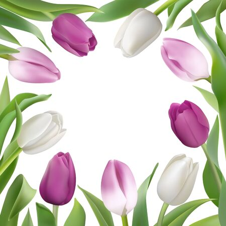 Many beautiful delicate Tulips with leaves on a white background with place for text. Photo-realistic vector lilac and white flowers for any festive design, invitation, wedding, birthday Illustration