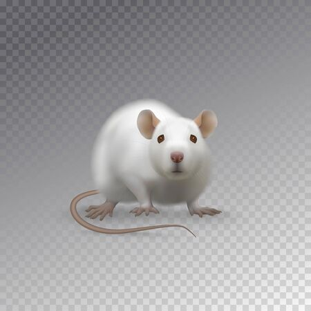 Cute white rat vector illustration