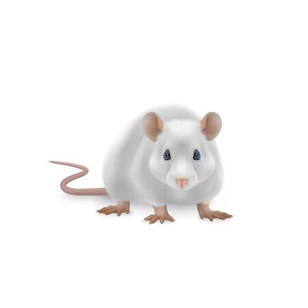 Ilustración de vector de rata linda Ilustración de vector