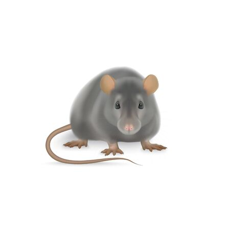 Cute rat vector illustration