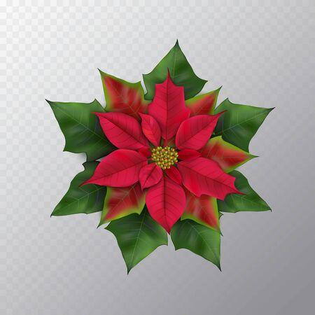 Christmas flower isolated Ilustracja