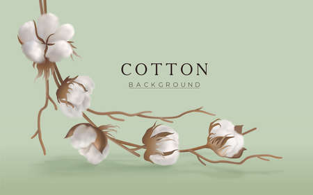 Cotton branch on a light green horizontal background