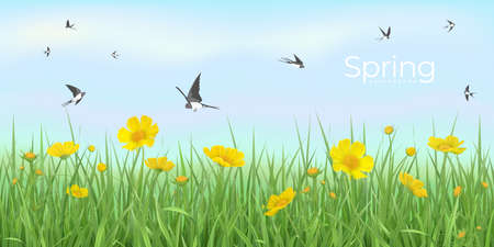 Spring background with flower meadow and flying swallows