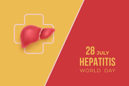 World hepatitis Day July 28 background with liver on red and yellow backdrop. Medical solidarity day concept. Vector illustration.