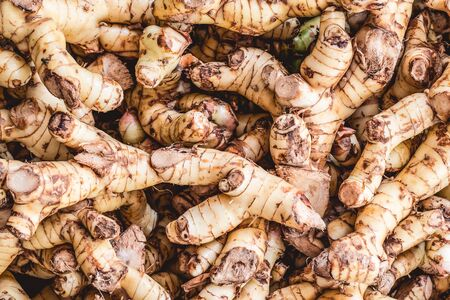 Lots of thick, fresh ginger roots washed with water, ready to eat