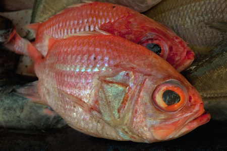 Red fish, two pieces for sale on the market of fishermen. Stock Photo