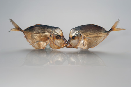 Kiss, photo joke: two smoked sea fish kissing in the mouth on a white background.