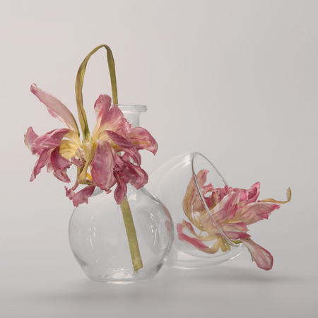 Pink peony on a long stem in a round glass flask, followed by an inverted transparent cup with a second peony, the dishes touching, a gentle gray background, a square photograph.