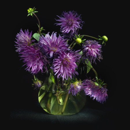 luxuriant: Still life with a bouquet of lush purple asters in a glass jug with clear water, lit by rays of light, on black background, square photo.