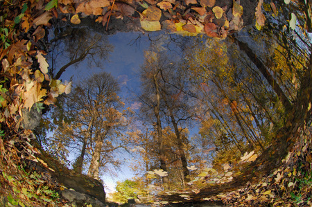 Reflection in the pond is rounded: tall trees along the edge tend upwards into the blue sky, on the surface the yellow and orange foliage that has flown over, a sunny autumn day.