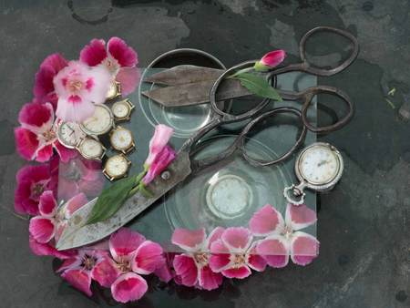 Two pairs of black antique scissors stuck into each other amidst pink and crimson flowers, white wristwatch on a transparent glass on a black background.