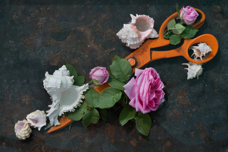 Huge orange metal scissors diagonally lie on a black background, decorated with blossoming flowers pink roses and white sea shells, art still life wall interiors.