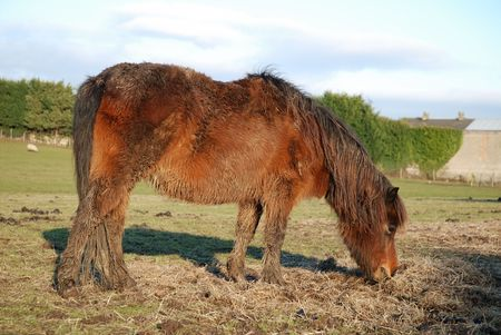 ungeliebt: Vernachl�ssigte Pony Lizenzfreie Bilder