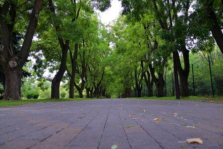 Callejón en el parque. Foto de archivo