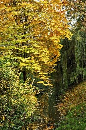 colored autumn trees in park, Czech Republic photo