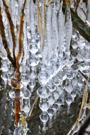 wintrily: Icicles along branches above river Luznice Stock Photo
