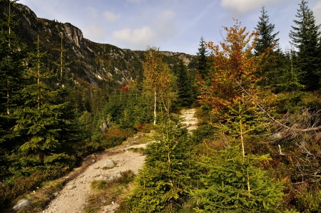 Valley Elbe in the national park Krkonose photo