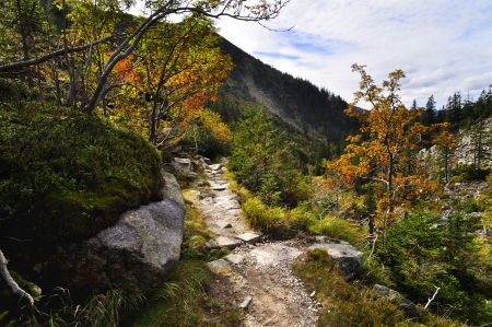 blue mountains tree frog: Mountain path in valley in the national park Krkonose