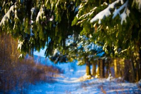 december: December Stock Photo