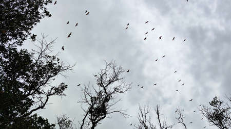 Photos of bats flying during the day