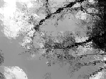 noir: Nature in Noir