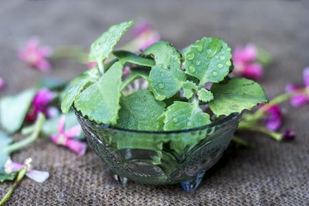 Trachyspermum ammi leaves in a glass bowl.