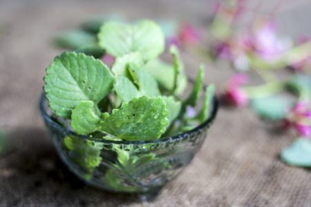 Ajwain, ajowan Trachyspermum ammi leaves in a glass bowl. Stock Photo