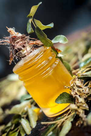Murraya koenigii,Curry leaves with extracted oil in a transparent bottle.Concept of taking care of hair and skin. Stock Photo
