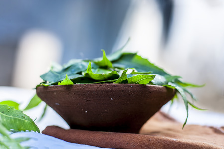 Azadirachta indica,Neem with its leaves in a clay bowl for skin care. Stock Photo