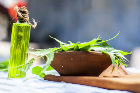 Azadirachta indica, Neem mit seinen Blättern und Öl in einer Flasche in einer Tonschale zur Hautpflege. Standard-Bild