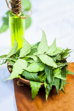 Azadirachta indica,Neem with its leaves and oil in a bottle  in a clay bowl for skin care. Stock Photo