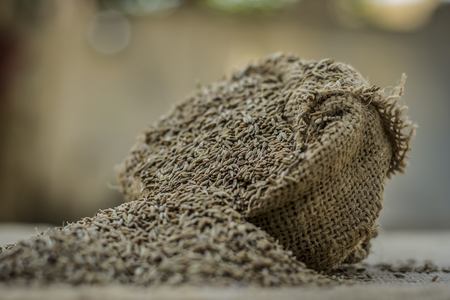 Raw organic cumin seeds,Cuminum cyminum  in  a gunny bag. Stock Photo