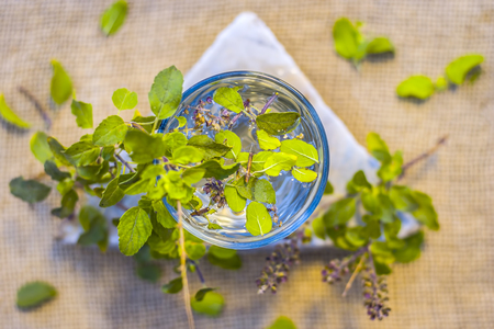 Water of holy basil, tulsi or Ocimum tenuiflorum in a transparent glass. Stock Photo