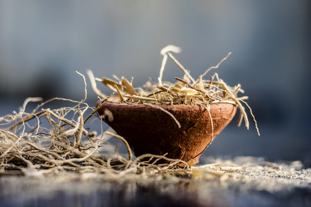 Dried vetiver grass or khus or Chrysopogon zizanioides grass in a clay bowl on wooden surface.