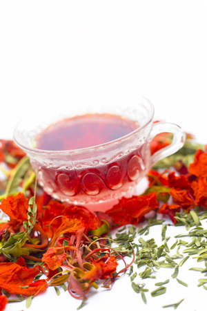 Close up of orange or red colored tea of Gular or Flame trees flowers isolated on white. Stock Photo