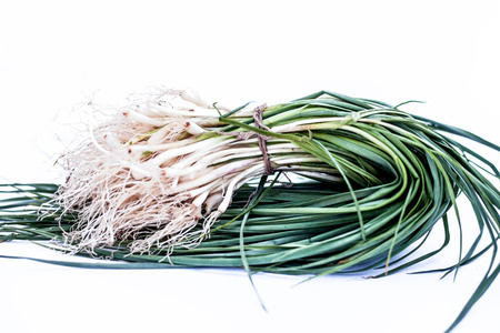 Close up of garlic shoots or spring garlic or young garlic or baby garlic isolated on white. 写真素材 - 122984425