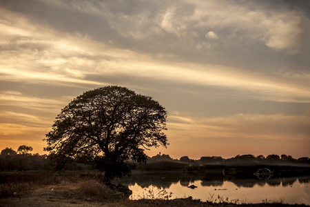 Silhouette of a solitary tree or a lonely tree in the field beside lake during sunset hours. Stock Photo