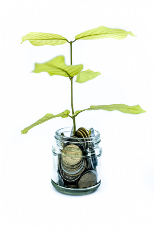 A glass jar full of coins and plant growing through it. Concept of savings, interest, fixed deposits, pension, social security cheque, Isolated on white.