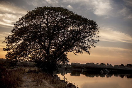 Silhouette of a solitary tree or a lonely tree in the field beside lake during sunset hours. 版權商用圖片