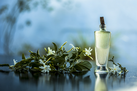 Close up of spray or perfume of Indian jasmine flower or juhi or Jasminum Auriculatum on wooden surface in a small bottle with raw flowers. Stockfoto