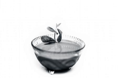 Close up shot of popular Indian sauce or chutney i.e. Phudina ki chutney isolated on white in a transparent glass bowl.