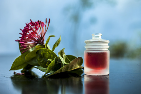 Close up of red colored pentas flower or Egyptian Star Flower or jasmine on wooden surface with its extracted essential oil in a transparent bottle.