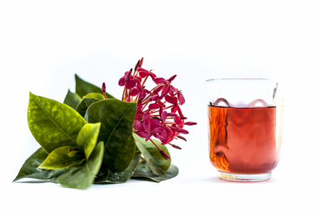 Red colored pentas flower or Egyptian Star Flower or jasmine isolated on white with its extracted water or drink in a transparent glass.