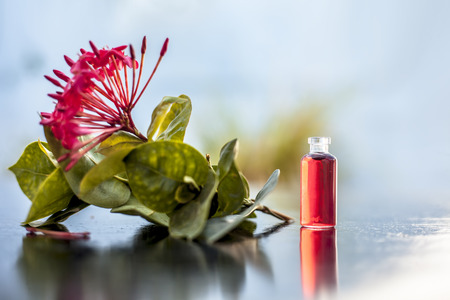 Red colored pentas flower or Egyptian Star Flower or jasmine on wooden surface with its extracted beneficial floral essence or essential oil in small transparent glass bottle.