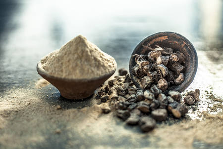 Popular Indian & Asian ayurvedic organic herb musli or Chlorophytum borivilianum or Curculigo orchioides or kali moosli in a clay with its powder in another bowl on wooden surface.