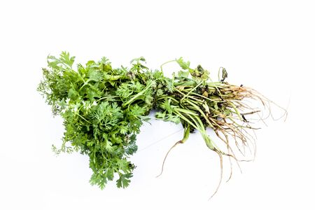 Raw organic fresh bunch of parsley leaves isolated on white. Stock Photo